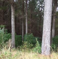 Waikanae Farms For Sale Wellington: Forestry Opportunity - 106ha